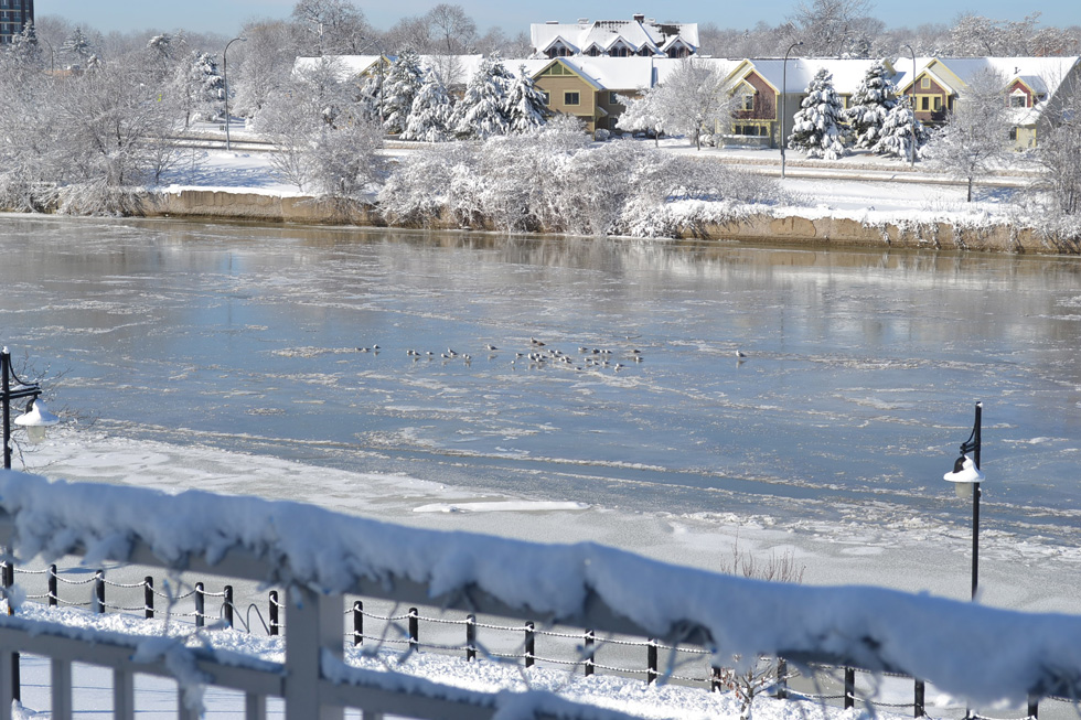 Even in the winter when the river is frozen, lots of birds and other wildlife are present. [PHOTO: RochesterSubway.com]