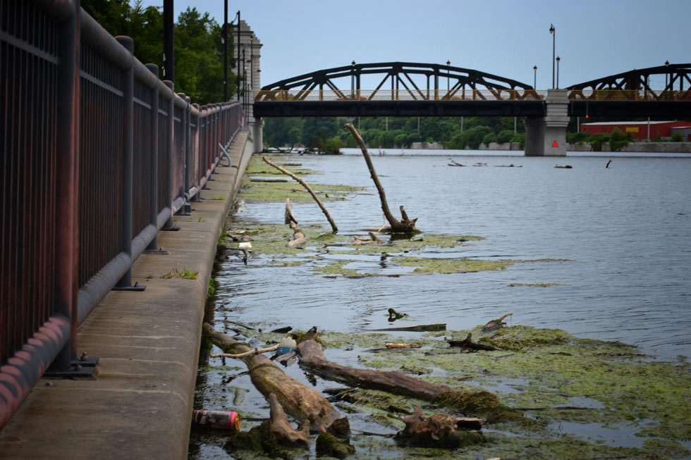 There's a steady stream of dead trees, algae, and garbage float down river. It all collects downtown. [PHOTO: RochesterSubway.com]