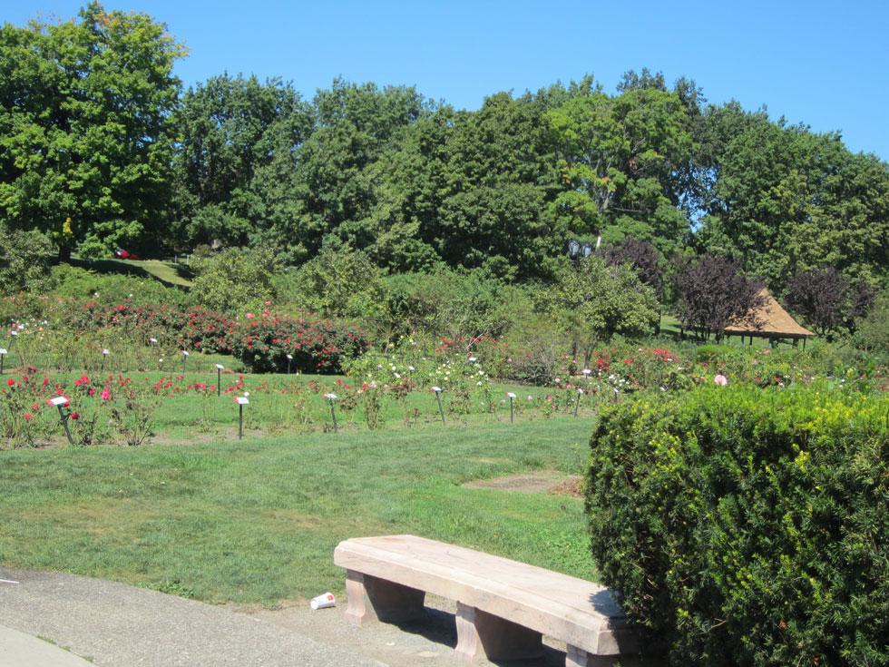 Maplewood Rose Garden. [PHOTO: Ryan Green]