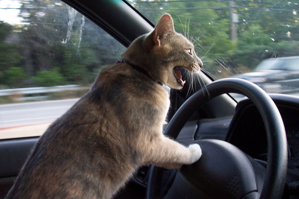 Road Rage: no one wins. [PHOTO: PDXdj, Flickr]