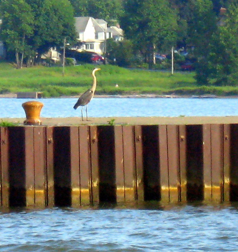 Bird watching from the pier at Summerville. [PHOTO: Diana Beideman]