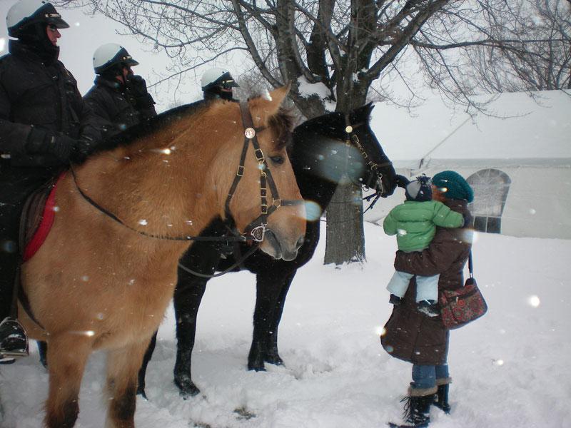 horsies...