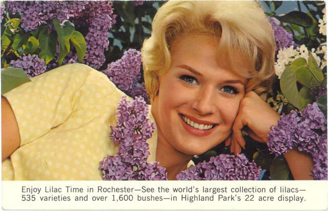 Holy smokes this woman is enjoying 'Lilac Time in Rochester'. Over 1,600 bushes... you don't say? (postcard, circa 1965)
